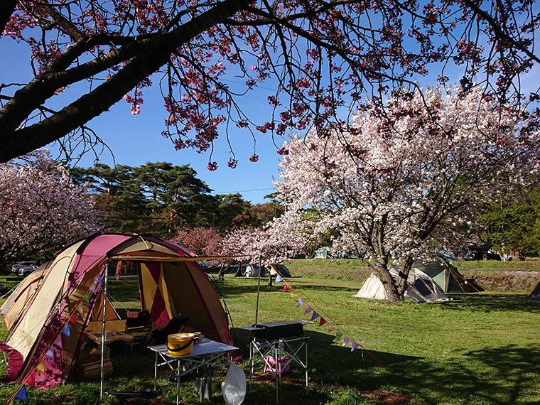 ペットとキャンプ!千人塚公園キャンプ場