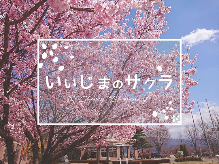 春の訪れ。いいじまのサクラ特集!第一弾